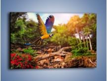 Obraz na płótnie – Kolorowa papuga w locie – jednoczęściowy prostokątny poziomy Z280