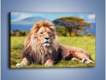 Obraz na płótnie – Dostojny lew na sawannie – jednoczęściowy prostokątny poziomy Z282