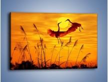 Obraz na płótnie – Czaple i zachód słońca – jednoczęściowy prostokątny poziomy Z302