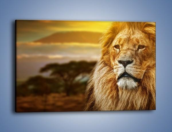 Obraz na płótnie – Dojrzały wiek lwa – jednoczęściowy prostokątny poziomy Z303