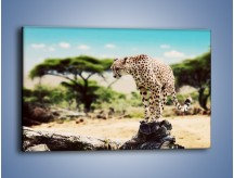 Obraz na płótnie – Cała zwinność geparda – jednoczęściowy prostokątny poziomy Z315