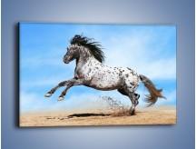 Obraz na płótnie – Rzadko spotykany okaz konia – jednoczęściowy prostokątny poziomy Z329