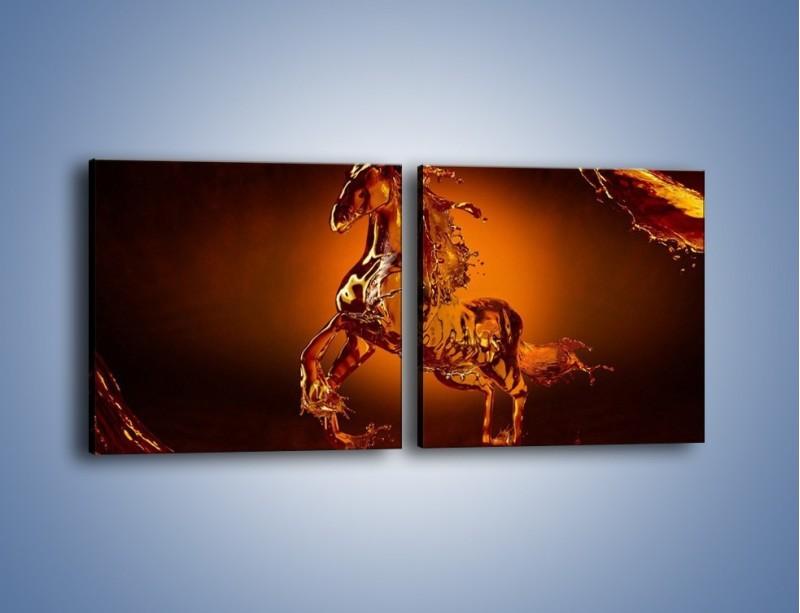 Obraz na płótnie – Wodny koń w mocnym świetle – dwuczęściowy kwadratowy poziomy GR228