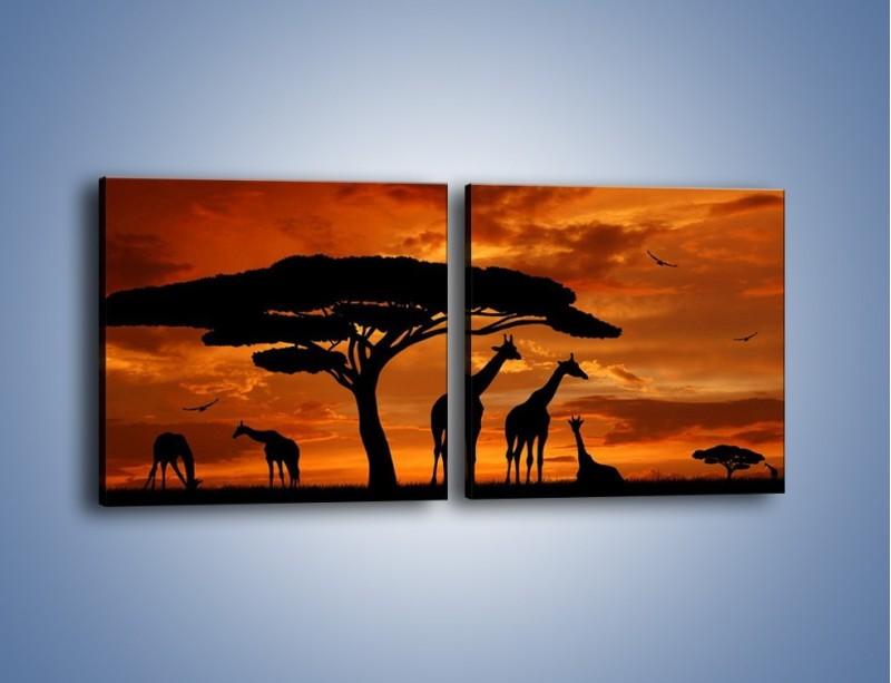 Obraz na płótnie – Żyrafy wieczorową porą – dwuczęściowy kwadratowy poziomy GR266