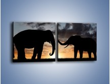 Obraz na płótnie – Dyskusja wśród słoni – dwuczęściowy kwadratowy poziomy GR309