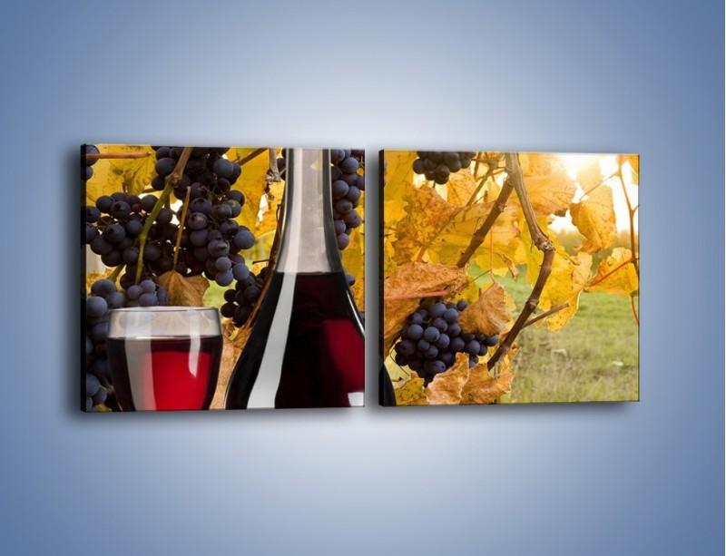 Obraz na płótnie – Wino wśród winogron – dwuczęściowy kwadratowy poziomy JN007
