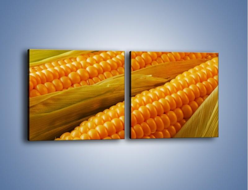 Obraz na płótnie – Kolby dojrzałych kukurydz – dwuczęściowy kwadratowy poziomy JN046
