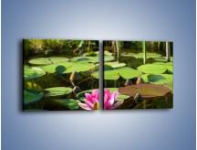 Obraz na płótnie – Ciemno-różowy nenufar na wodzie – dwuczęściowy kwadratowy poziomy K014