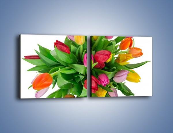 Obraz na płótnie – Wiązanka kolorowych tulipanów – dwuczęściowy kwadratowy poziomy K019