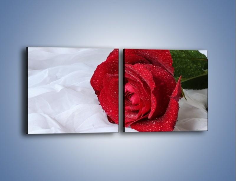 Obraz na płótnie – Bordowa róża na białej pościeli – dwuczęściowy kwadratowy poziomy K1023