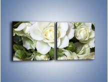 Obraz na płótnie – Białe róże na stole – dwuczęściowy kwadratowy poziomy K131