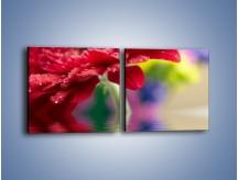 Obraz na płótnie – Bordowy kwiat odbity w wodzie – dwuczęściowy kwadratowy poziomy K138