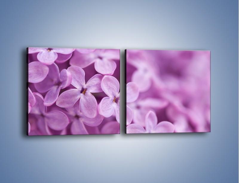 Obraz na płótnie – Bez w swoim towarzystwie – dwuczęściowy kwadratowy poziomy K150