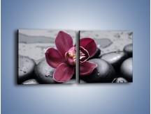 Obraz na płótnie – Bordowy storczyk i ciemne towarzystwo – dwuczęściowy kwadratowy poziomy K156