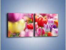 Obraz na płótnie – Boso przez tulipany – dwuczęściowy kwadratowy poziomy K344