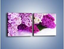 Obraz na płótnie – Bez w różnych kolorach – dwuczęściowy kwadratowy poziomy K389