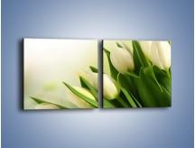 Obraz na płótnie – Białe tulipany na zgodę – dwuczęściowy kwadratowy poziomy K400
