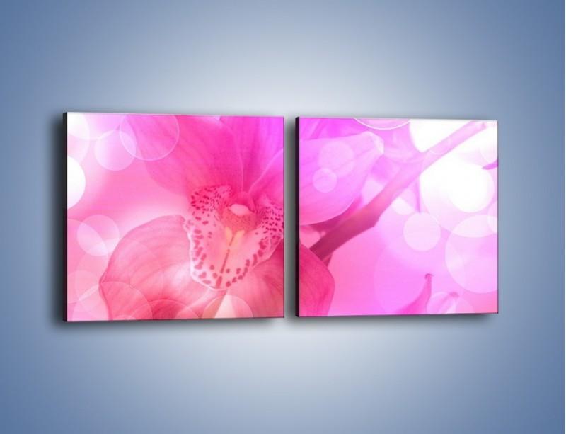 Obraz na płótnie – Budzący dzień w różowym kwiecie – dwuczęściowy kwadratowy poziomy K487