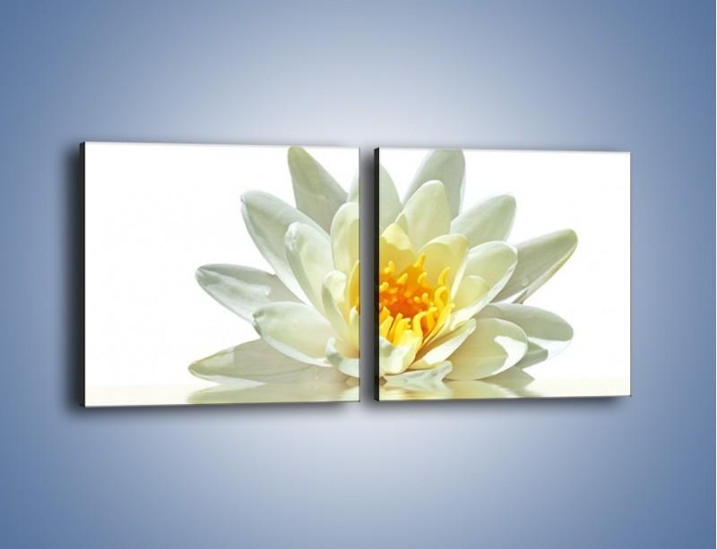 Obraz na płótnie – Biel z pomarańczą w kwiecie – dwuczęściowy kwadratowy poziomy K674