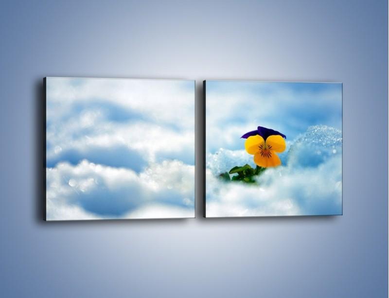 Obraz na płótnie – Bratek na śnieżnym niebie – dwuczęściowy kwadratowy poziomy K744