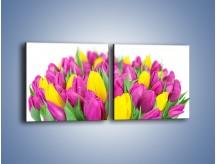 Obraz na płótnie – Bukiet fioletowo-żółtych tulipanów – dwuczęściowy kwadratowy poziomy K778