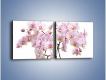 Obraz na płótnie – Cieniutkie gałązki storczyków – dwuczęściowy kwadratowy poziomy K813