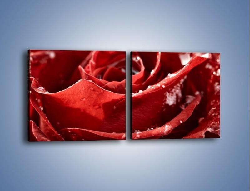 Obraz na płótnie – Chłód w różanych płatkach – dwuczęściowy kwadratowy poziomy K932