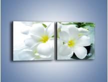 Obraz na płótnie – Białe kwiaty w potoku – dwuczęściowy kwadratowy poziomy K991