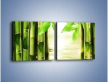 Obraz na płótnie – Bambusowe liście i łodygi – dwuczęściowy kwadratowy poziomy KN027
