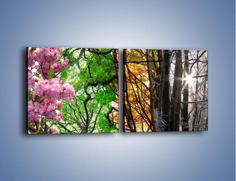 Obraz na płótnie – Drzewa w różnych kolorach – dwuczęściowy kwadratowy poziomy KN037