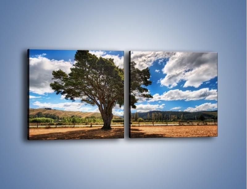 Obraz na płótnie – Cień pod rozłożystym drzewem – dwuczęściowy kwadratowy poziomy KN1037