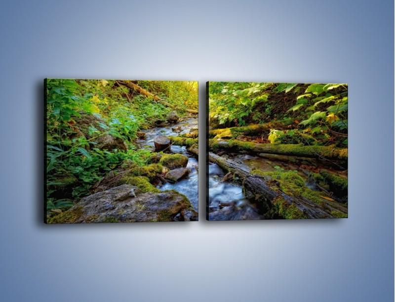 Obraz na płótnie – Drewno ścięte do wody – dwuczęściowy kwadratowy poziomy KN1059