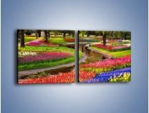 Obraz na płótnie – Aleje kolorowych tulipanów – dwuczęściowy kwadratowy poziomy KN1079
