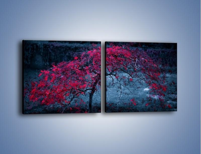 Obraz na płótnie – Czerwone płaczące drzewo – dwuczęściowy kwadratowy poziomy KN1101A