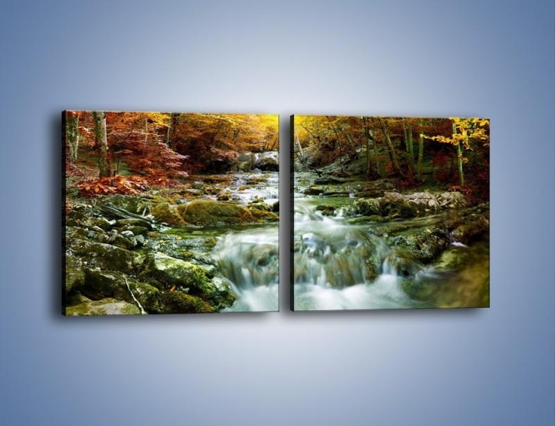 Obraz na płótnie – Wilgoć w lesie – dwuczęściowy kwadratowy poziomy KN1118A