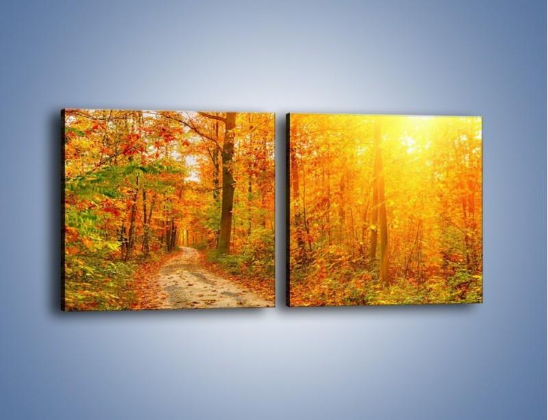 Obraz na płótnie – Leśną drużką jesienią – dwuczęściowy kwadratowy poziomy KN1163A