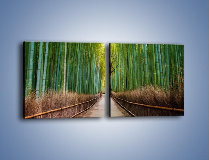 Obraz na płótnie – Bambusowy las – dwuczęściowy kwadratowy poziomy KN1187A