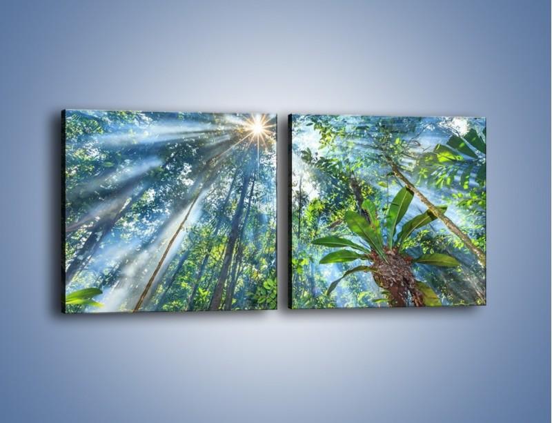 Obraz na płótnie – Dyzio marzyciel i drzewa – dwuczęściowy kwadratowy poziomy KN1189A