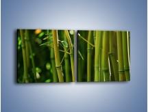 Obraz na płótnie – Bambusowe łodygi z bliska – dwuczęściowy kwadratowy poziomy KN118