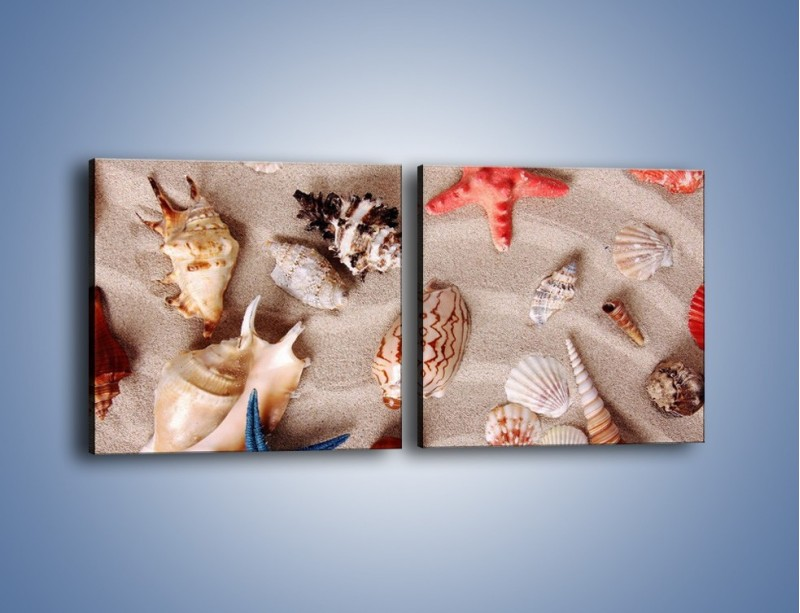 Obraz na płótnie – Kolorowe skorupiaki – dwuczęściowy kwadratowy poziomy KN1214A