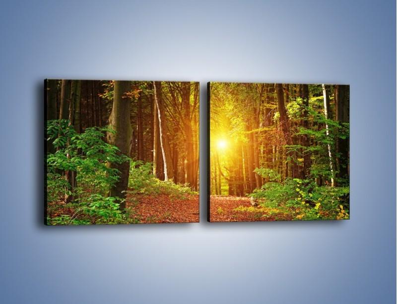 Obraz na płótnie – Polski krajobraz leśny – dwuczęściowy kwadratowy poziomy KN1257A