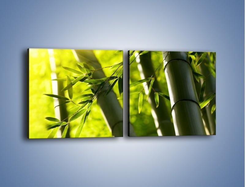 Obraz na płótnie – Twarde łodygi bambusa – dwuczęściowy kwadratowy poziomy KN1314A