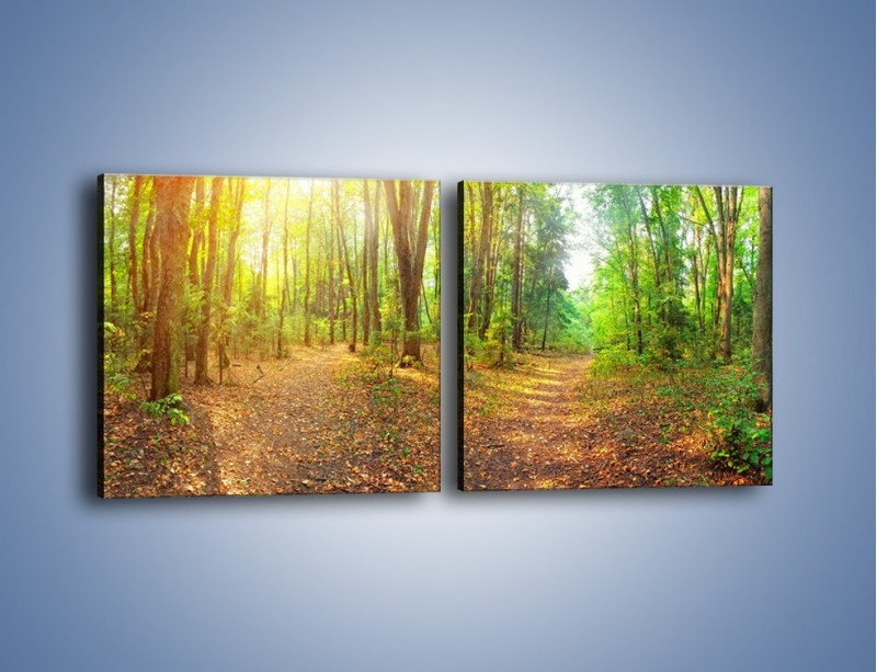 Obraz na płótnie – Przejrzysty piękny las – dwuczęściowy kwadratowy poziomy KN1344A