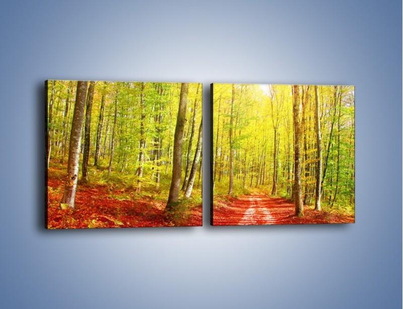 Obraz na płótnie – Brzózki liście i las – dwuczęściowy kwadratowy poziomy KN1345A