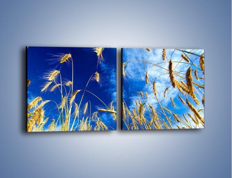 Obraz na płótnie – Zboże w niebie – dwuczęściowy kwadratowy poziomy KN139