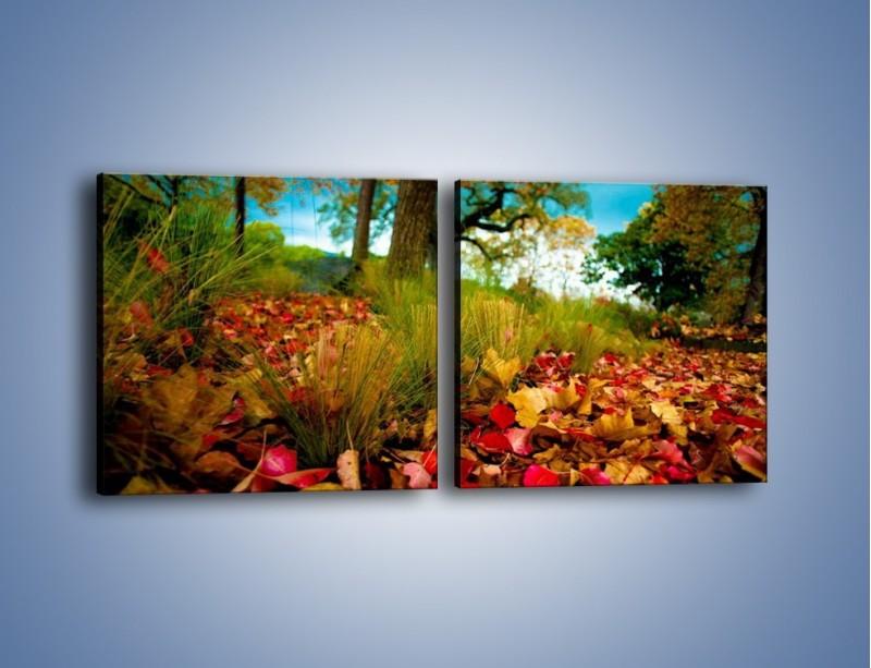 Obraz na płótnie – Droga usłana liśćmi – dwuczęściowy kwadratowy poziomy KN172
