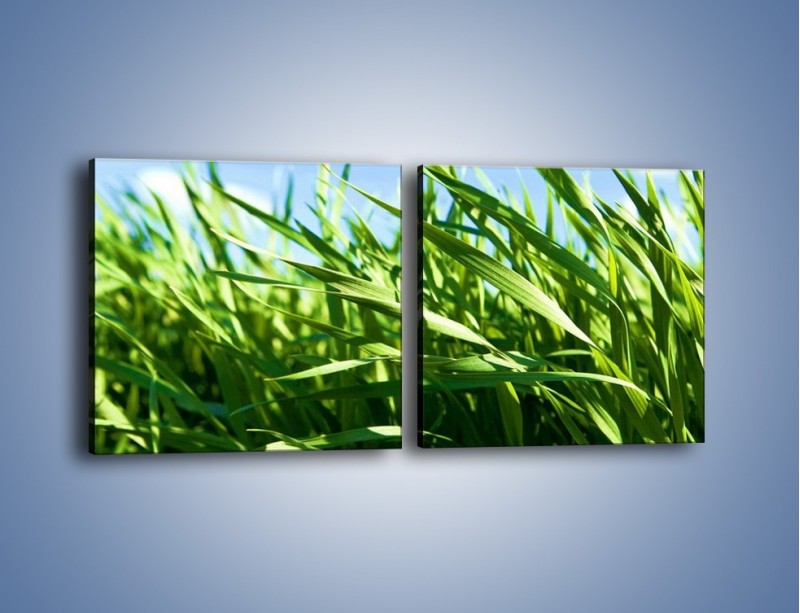 Obraz na płótnie – Wiatr w łodygach – dwuczęściowy kwadratowy poziomy KN176