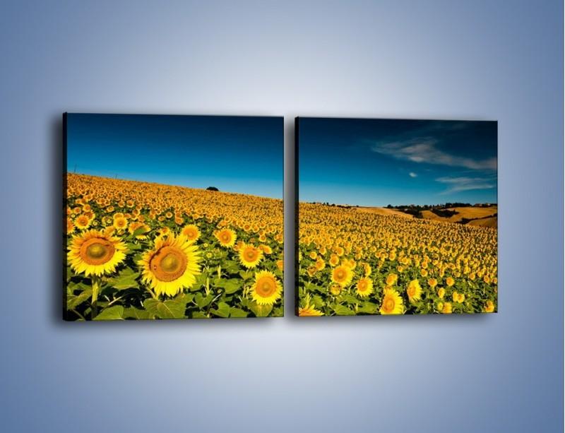 Obraz na płótnie – Słonecznikowe uśmiechnięte główki – dwuczęściowy kwadratowy poziomy KN205