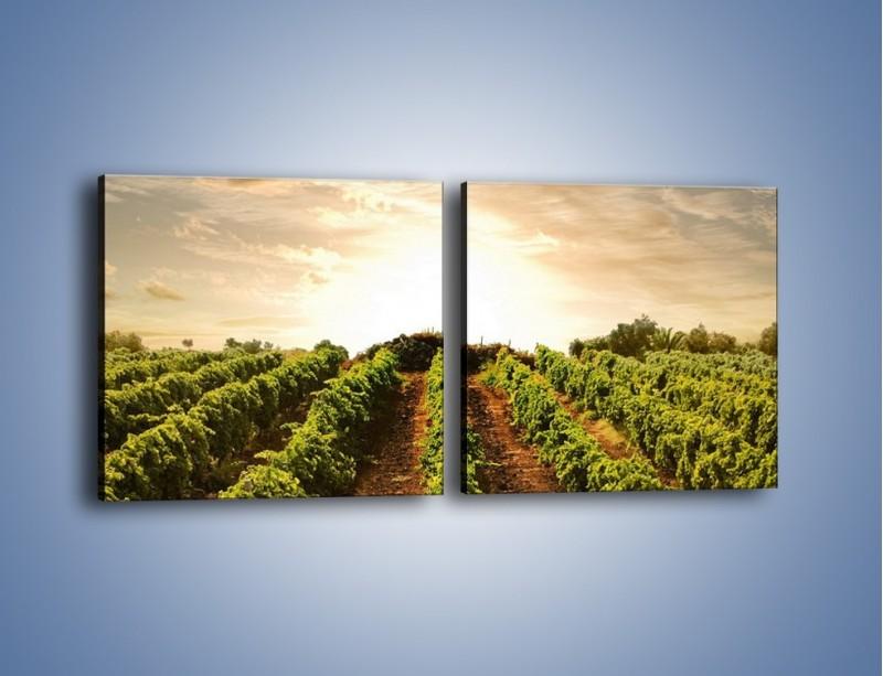 Obraz na płótnie – Spacer między uprawami – dwuczęściowy kwadratowy poziomy KN227