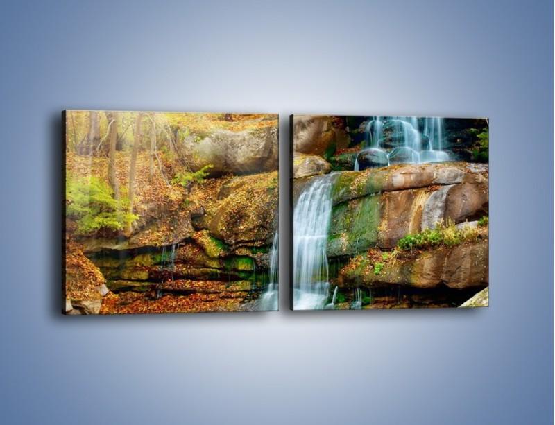Obraz na płótnie – Leśne podłoże późną jesienią – dwuczęściowy kwadratowy poziomy KN563